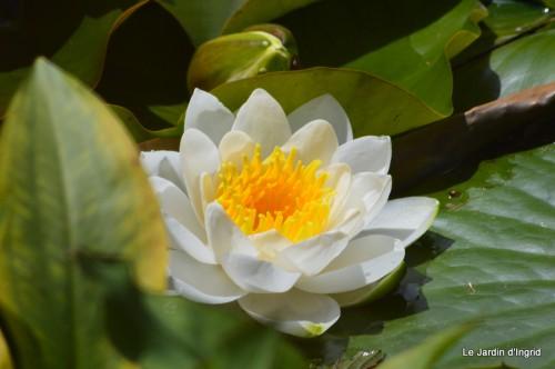 la mare,pt jardin,passiflore,Sophie,le canal,vues jardin 057.JPG