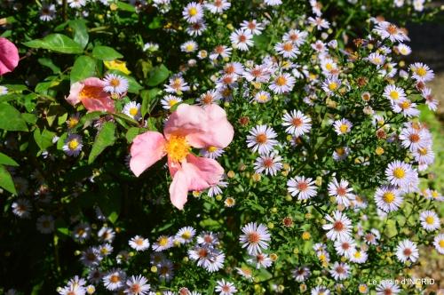 insectes,fleurs,land art,Couze,chateau de Banes,Lalinde,Monsac 007.JPG