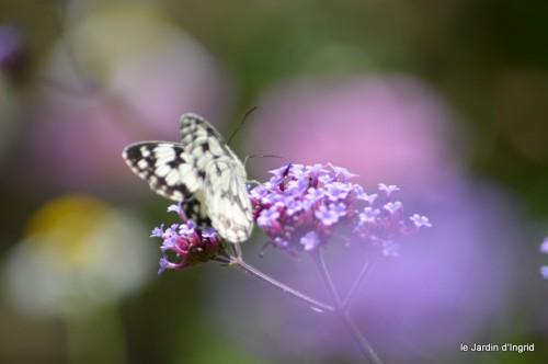 coeur des fleurs,papillons,libellules 118.JPG