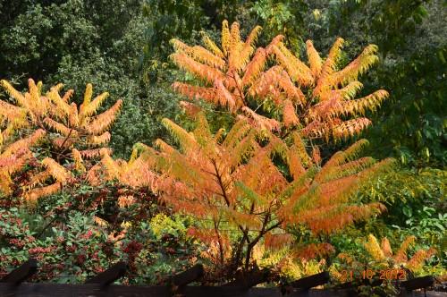 automne,troc2012,Mouleydier,serre 011.JPG