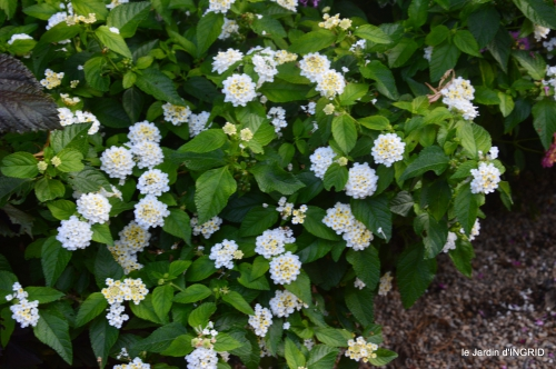 Fleurettes,Dordogne,jardin 113.JPG