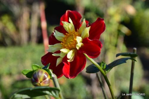 jardin, feuilles,sauges,gloriette,land art 007.JPG