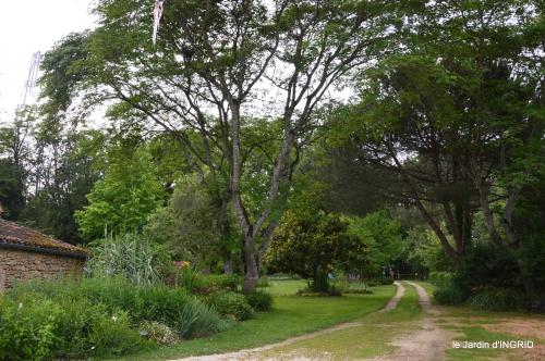 jardin,chez Bernadette,puces,cygnes,pluie 171.JPG