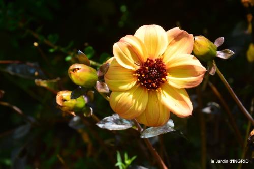 jardin,papillons,Cadouin,légumes,Sophie, 079.JPG