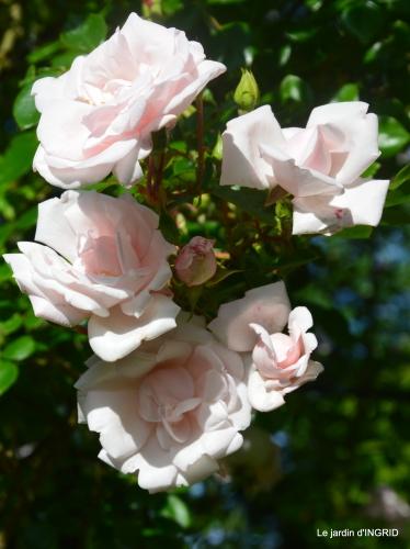 les roses,les 4 filles,jardin,Julie,coquelicots,cygnes 015.JPG
