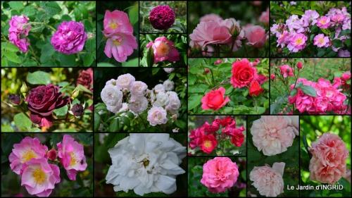 2014-05-14 canal,fleurs blanches,marguerites,LE FLEIX,osier.jpg
