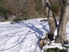janvier fevrier 2012 113.JPG