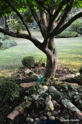 jardin en septembre,les cygnes 132.JPG