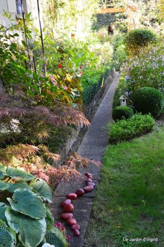 jardin,asters,fleurs blanches,chatte,rosiers roses 087.JPG