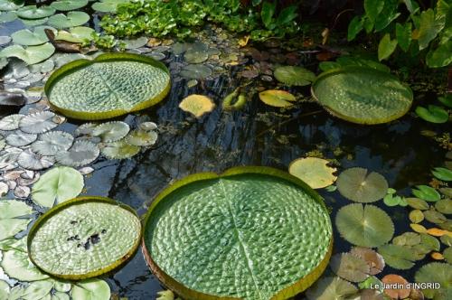 les jardins d'eau de Carsac 142.JPG