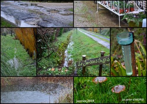 2018-01-22 bulbes,perce neige,narcisse,pluie,hélébore,chapelle2.jpg