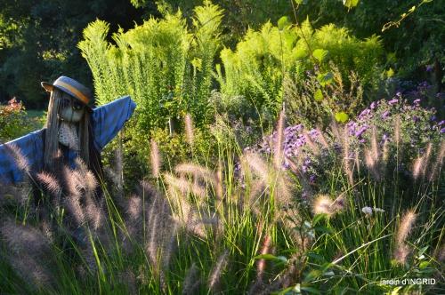 Asters,papillons,Hassina sapin,jardin 040.JPG