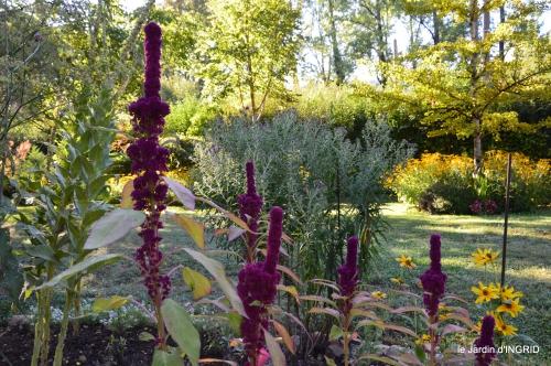 Belves puces,jardin,cygnes,bouquet blanc,arrosage 076.JPG