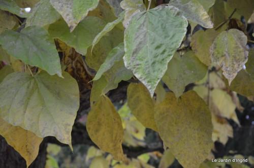 sauges,plectanthrus,Romane,canal,manthe r.,automne 018.JPG