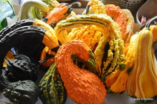 Issigeac,citrouilles ,rhus,automne,jardin 038.JPG