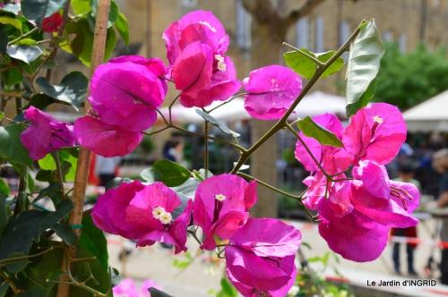 Cadouin,ancolies,roses,pollen,osier,photos Fabien,coquelicots 043.JPG