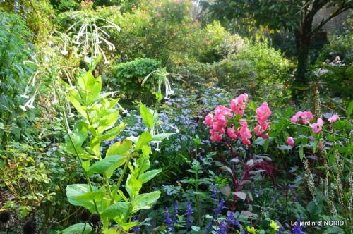 male ancienne,septembre jardin,couronne,bouquet 058.JPG