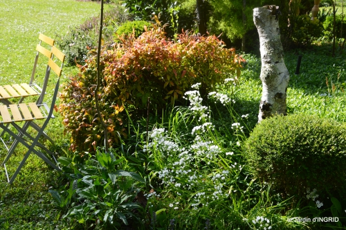 rosier de banks,jardin,cygnes,osier 089.JPG