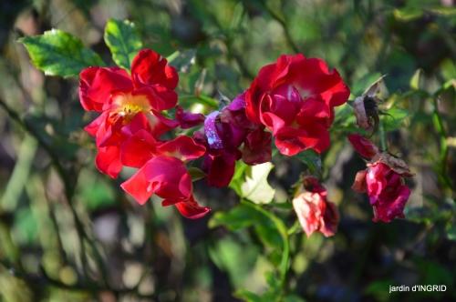 fin de l'automne,Lalinde,bouquet de l'avent 046.JPG
