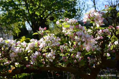 Bergerac, jardin ,arbres fruitiers,printemps 067.JPG