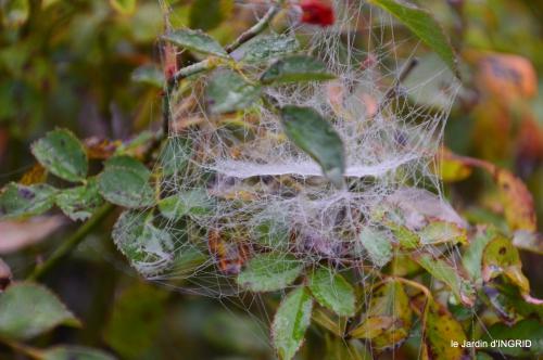 brouillard le matin d'automne 020.JPG