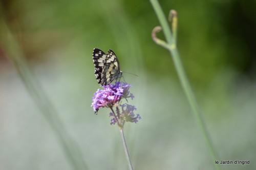coeur des fleurs,papillons,libellules 176.JPG