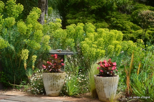 jardin avril et mai, 070.JPG