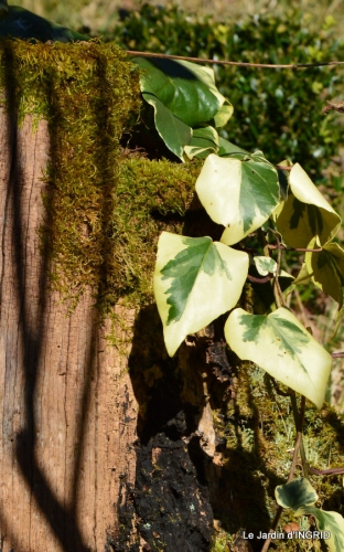 bureau,arbustes dorés 021.JPG