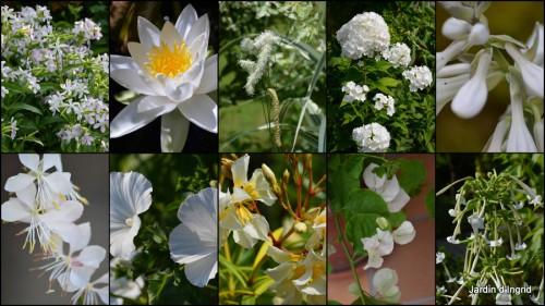 2013-07-02 coeur des fleurs,papillons,libellules1.jpg