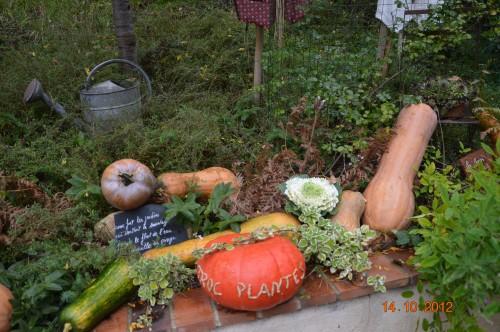champignons,citrouilles,st Mayme de Péreyrol,fuschias,jardin aut 127.JPG