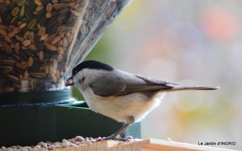 enveloppes,chez Bernadette,oiseaux 058.JPG