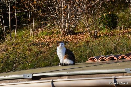 dernières automne,givre,chat 078.JPG
