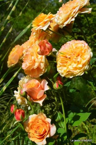 bouquet d ete,Plambouissin,grotte ,Erignac,Campagne,Julie 183.JPG