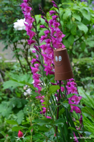 trémolat,oiseaux,jardin,cygnes,roses, 045.JPG