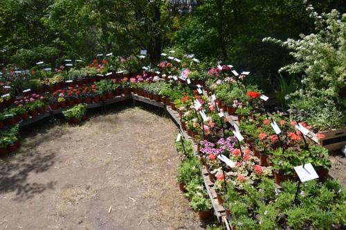 ancolies,jardins de la Brande,les filles et Caro 034.JPG