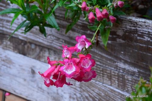 brume,dentelles,fleurs,Noel Jardiland 020.JPG