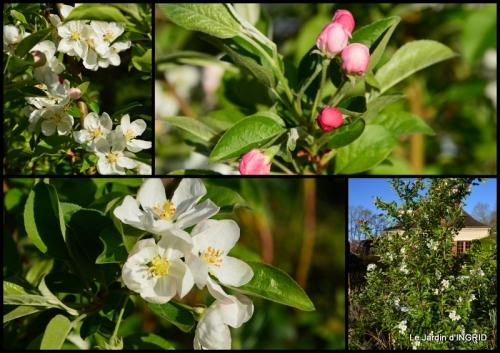 2015-03-28 jardin (3 semaine de mars)3.jpg