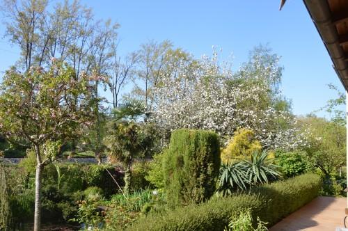 zoom sur fleur printemps 001.JPG