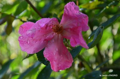 tour de jardin,bouquet,chez Bernadette, 060.JPG