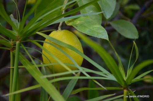 bureau,arbustes dorés 017.JPG