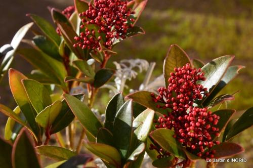 Grues et plantes à Ciron 016.JPG