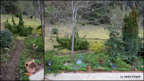 2014-03-28 jardin ,cane sauvage,paquerettes,tulipes1.jpg