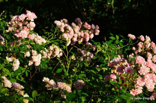 jardin début d'automne ,Sophie,rouge 027.JPG