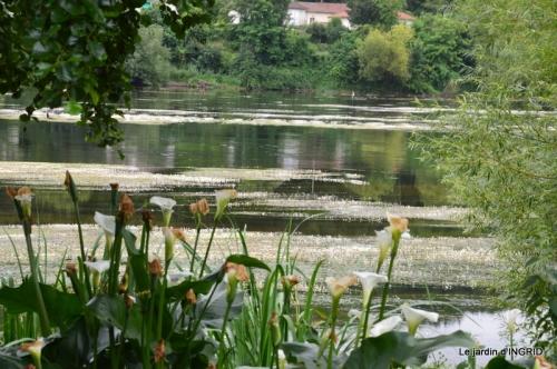 sentier des cygnes,hémérocalles,bouquet,jardin 097.JPG