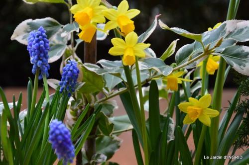 rose blanche,jardinière ,jardin,pt cyclamen 009.JPG