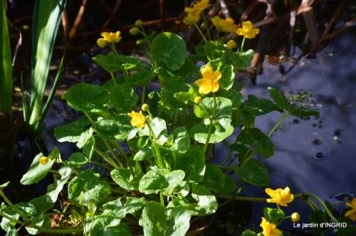 semis,bassin,tour du jardin 121.JPG