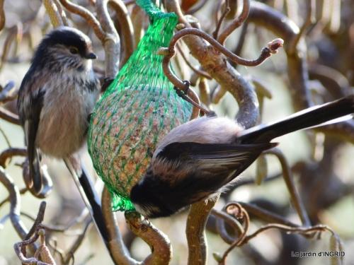 jardin givré,oiseaux 059.JPG