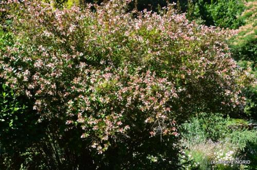 albizia,bouquet,plantes  en A 029.JPG