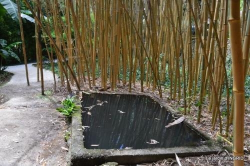 bambous Roque Gageac,jardin,bouquet 155.JPG