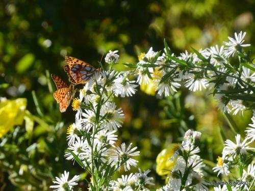 papillons,couleurs d'automne,Bernadette,pluie 060.JPG